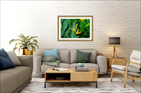 Heliconia 36x24 living